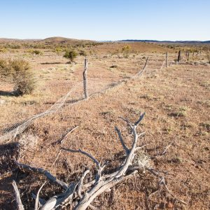 Boundary fence somewhere in the Flinders Ranges in South Australia. In my travels as a landscape photographer I come across many boundary fences.