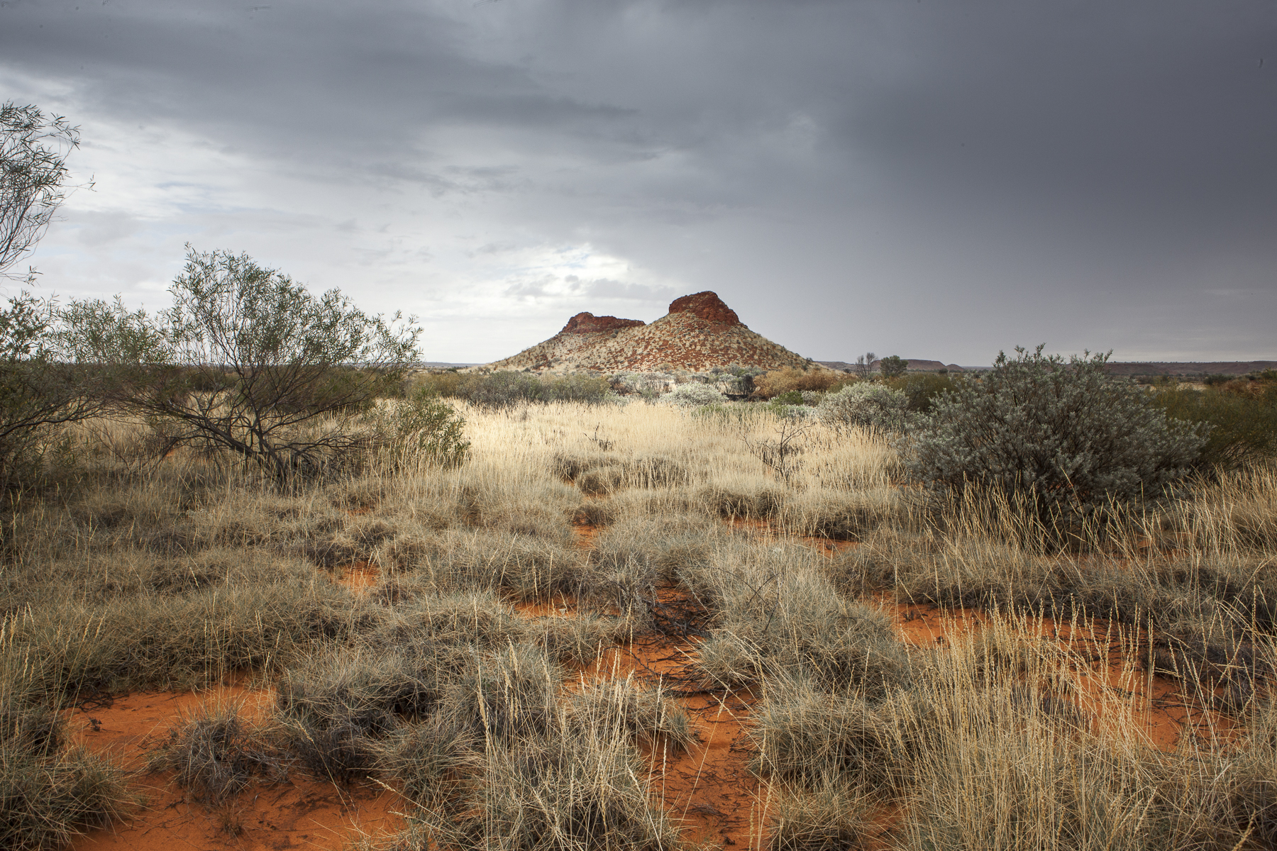 the australian landscape Landscapes in australian art and identity the landscape is so common in depictions of australia that it is almost a cliché advertisements usually show a picture of.